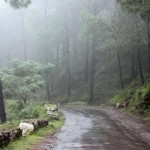 Old Kasauli Road