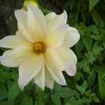 Flower variety - 4