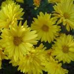 Flower variety - 6